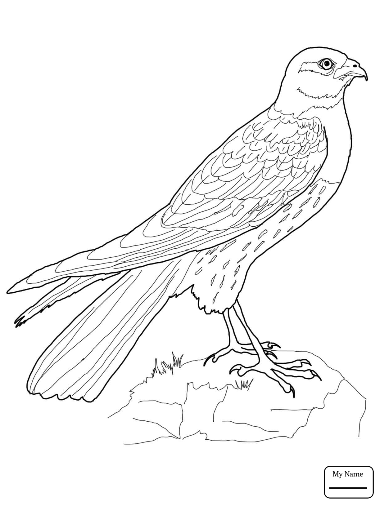 how do you draw a hawk red tail hawk drawing at getdrawings free download how you hawk a do draw
