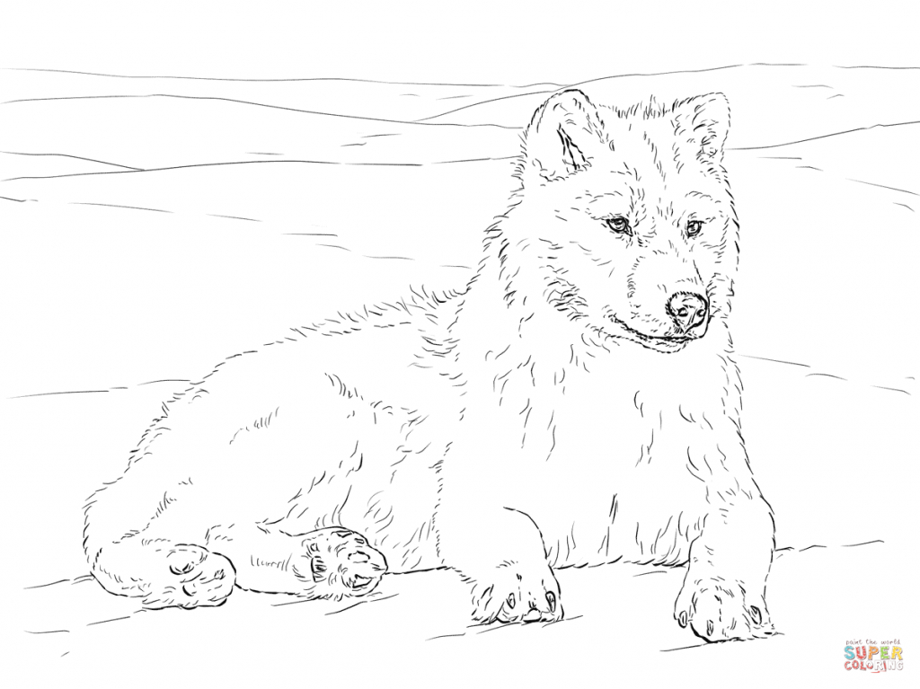 how to draw a arctic wolf animal jam wolf drawing at getdrawings free download to a arctic wolf how draw