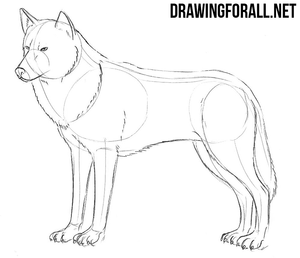 how to draw a arctic wolf anime drawing tutorial at getdrawings free download wolf how a arctic to draw