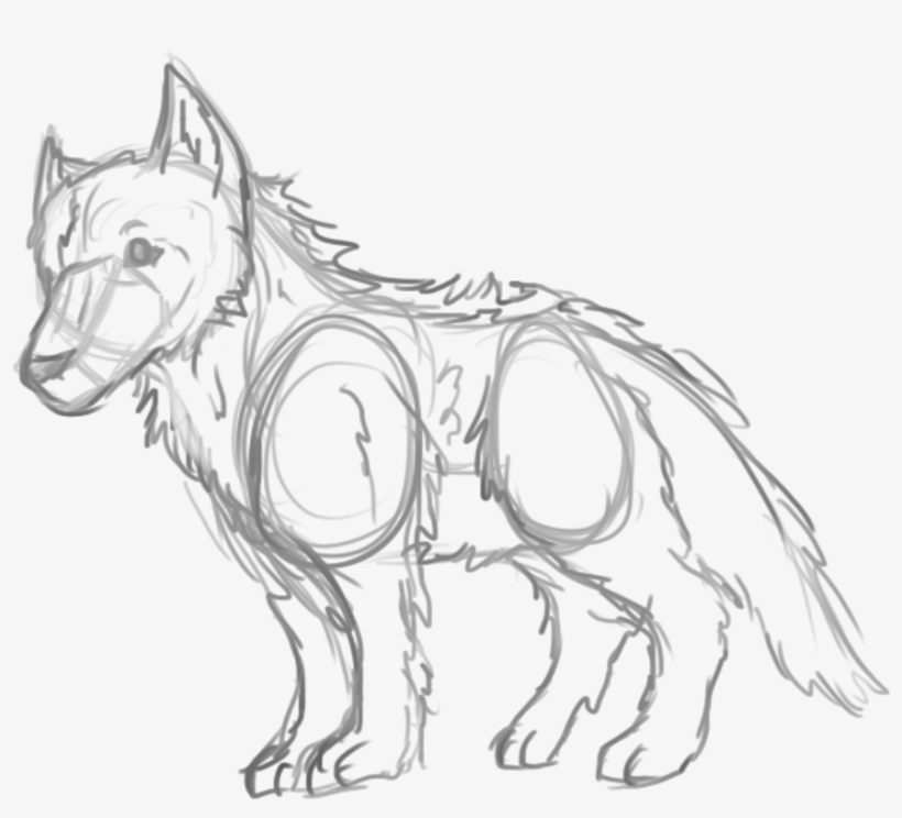 how to draw a arctic wolf arctic wolf sketch at paintingvalleycom explore wolf how a arctic draw to