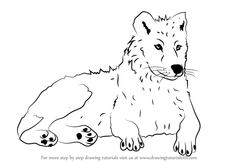 how to draw a arctic wolf how to draw an arctic wolf drawing tutorial mit bildern arctic draw to how wolf a