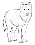 how to draw a arctic wolf how to draw an arctic wolf wild animals step by step wolf a to draw arctic how