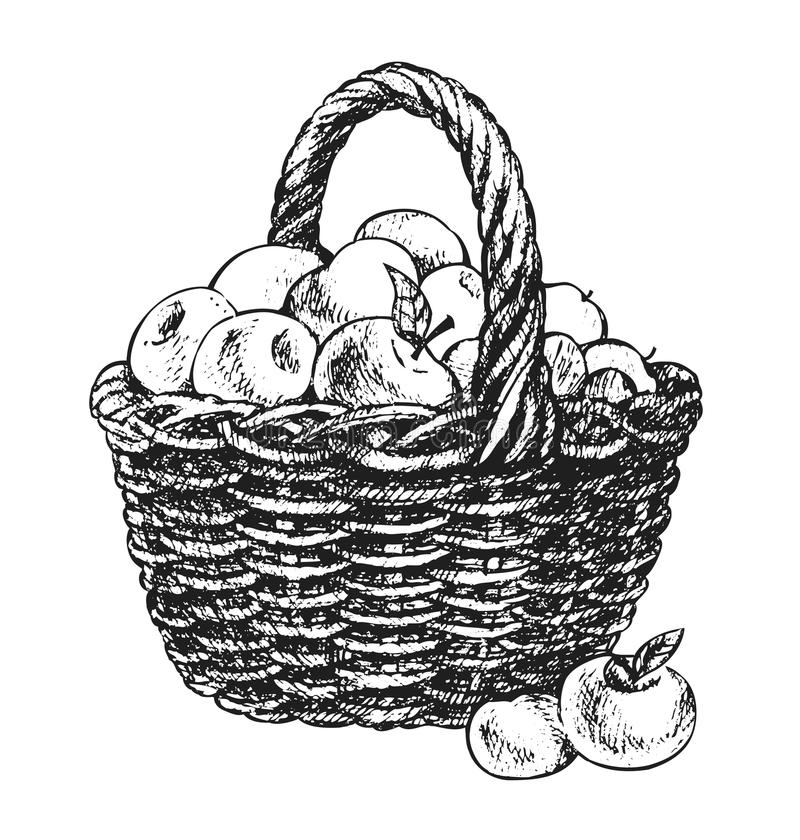 how to draw a basket of apples apple basket coloring page sketch coloring page apples a draw how basket of to