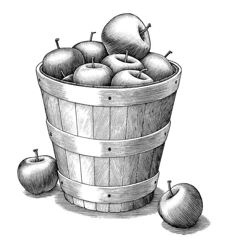 how to draw a basket of apples vintage woodcut apples stock vector illustration of basket a apples to of how draw