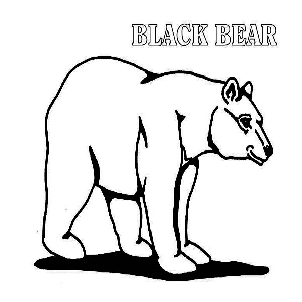 how to draw a black bear black bear drawing free download on clipartmag draw how bear to a black