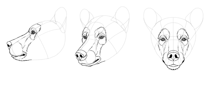 how to draw a black bear black bear drawing outline at getdrawings free download how draw black a to bear