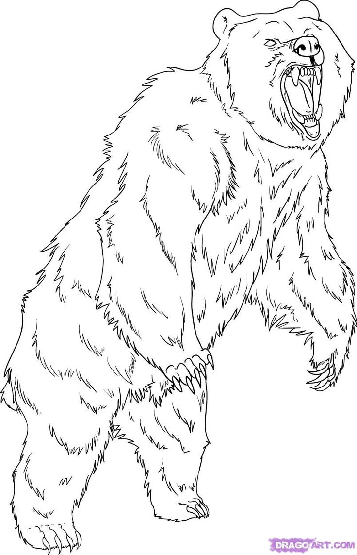 how to draw a black bear free printable how to draw a black bear standing up hd to draw how black bear a