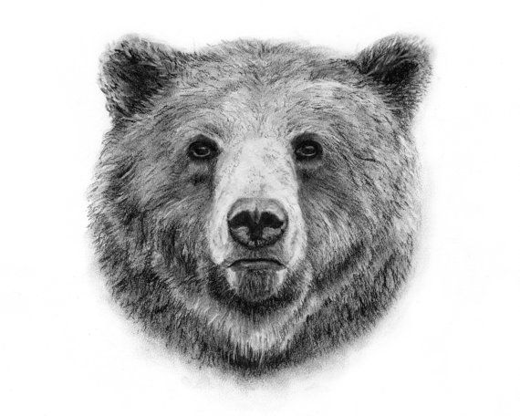 how to draw a black bear grizzly bear charcoal drawing giclee print animal draw to a black how bear