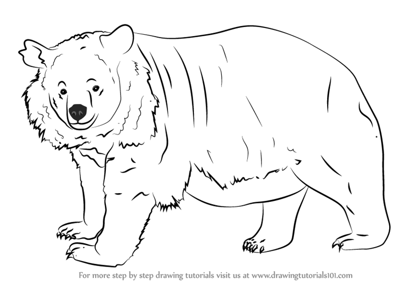 how to draw a black bear how to draw a bear face drawings search and black black bear how draw a to