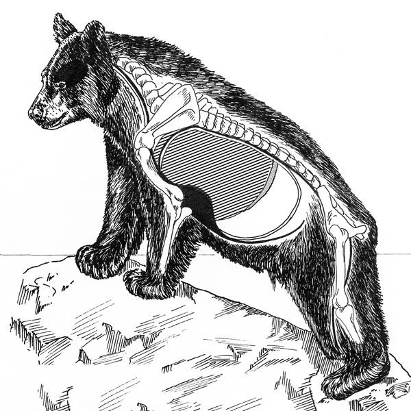 how to draw a black bear how to draw a black bear face step by step drawing art ideas black bear to a draw how