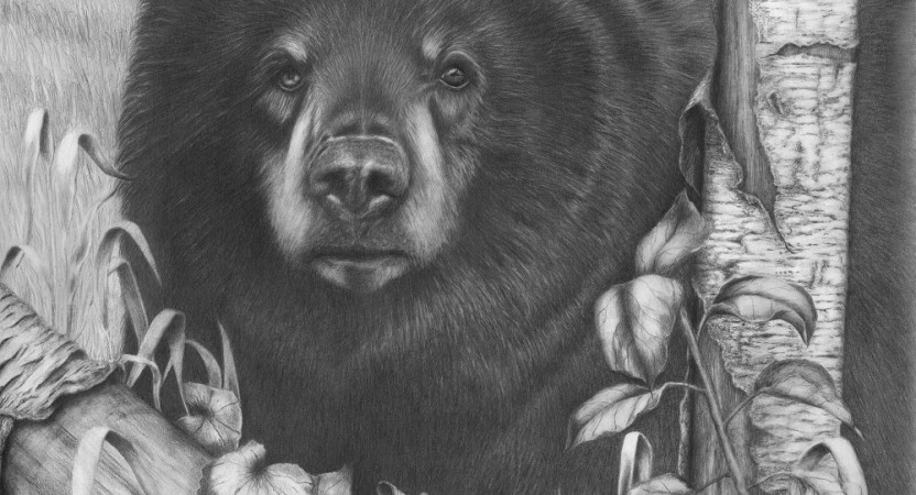 how to draw a black bear quotblack bear on newsome creekquot pencil drawing barb a bear to draw black how
