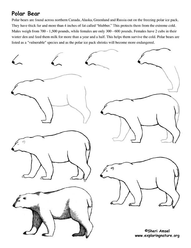 how to draw a black bear step by step bear polar drawing lesson bear step draw how a to black step by