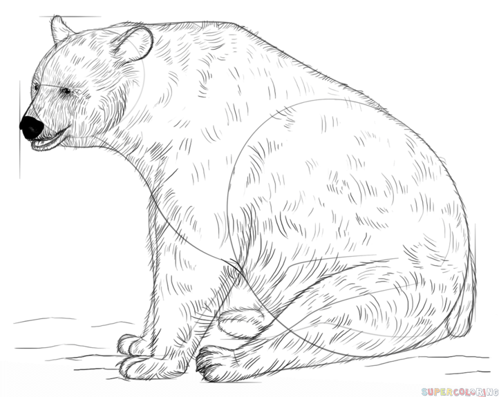 how to draw a black bear step by step how to draw a black bear face step by step drawing art ideas to bear by black step how draw step a