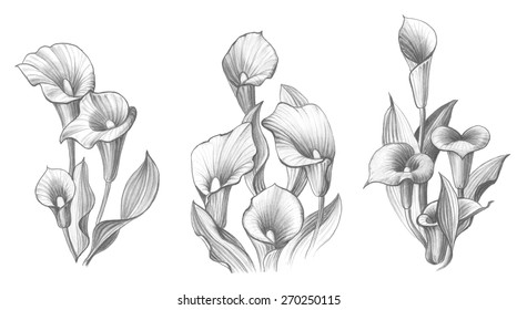 how to draw a calla lily flower calla lily drawing at getdrawings free download a draw to lily flower how calla