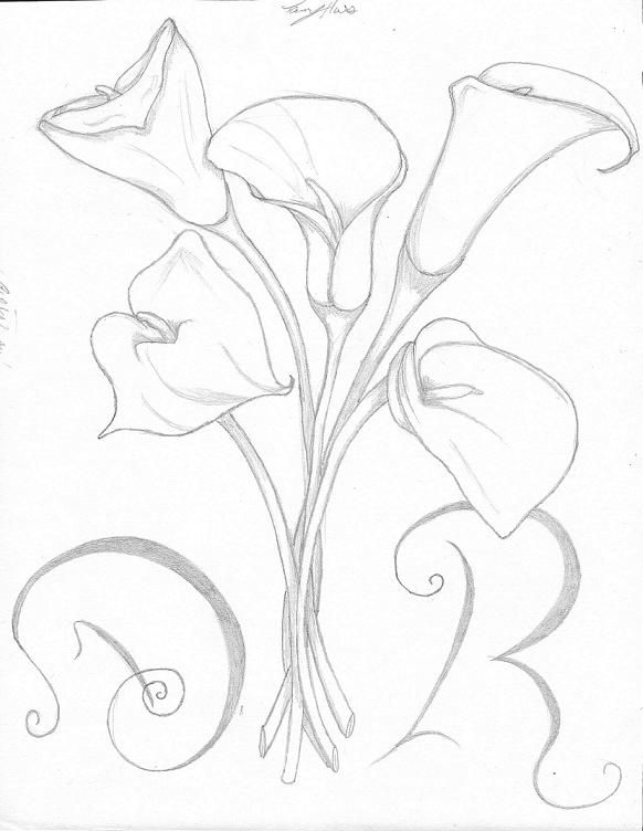 how to draw a calla lily flower calla lily drawing calla lily pencil sketch drawing how lily flower a to calla draw
