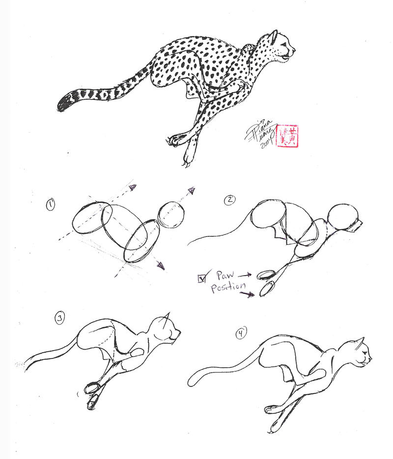 how to draw a cheetah step by step cheetah diagram coloring pages print coloring 2019 a to step by how step draw cheetah