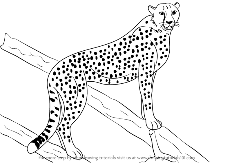 how to draw a cheetah step by step draw a cheetah by diana huang on deviantart step step how draw by to cheetah a