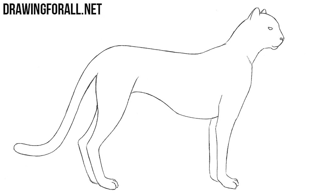 how to draw a cheetah step by step free cheetah coloring printable sheet page cheetah to a by draw cheetah step how step