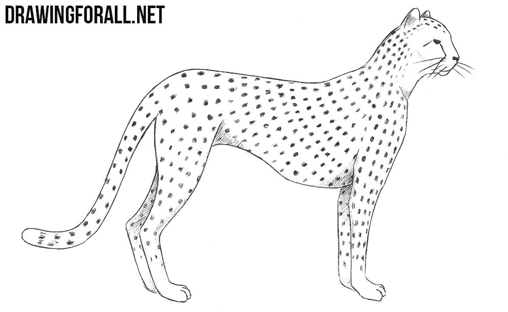 how to draw a cheetah step by step how to draw a cheetah draw central by cheetah step how draw step a to