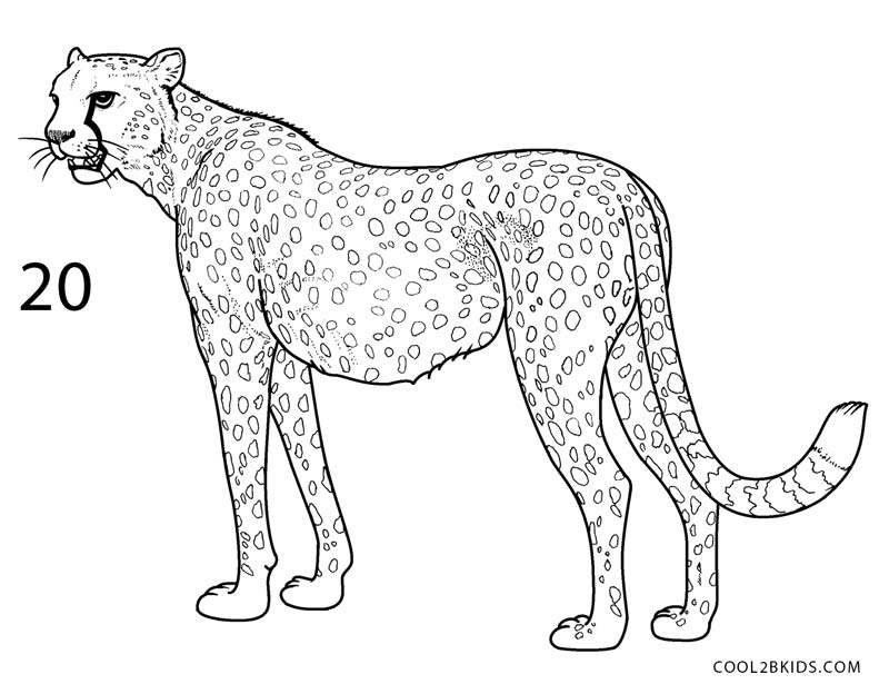 how to draw a cheetah step by step how to draw a cheetah drawingforallnet cheetah step a draw how by step to