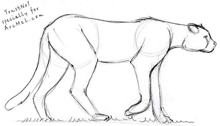 how to draw a cheetah step by step how to draw a cheetah drawingforallnet step draw a by how to step cheetah