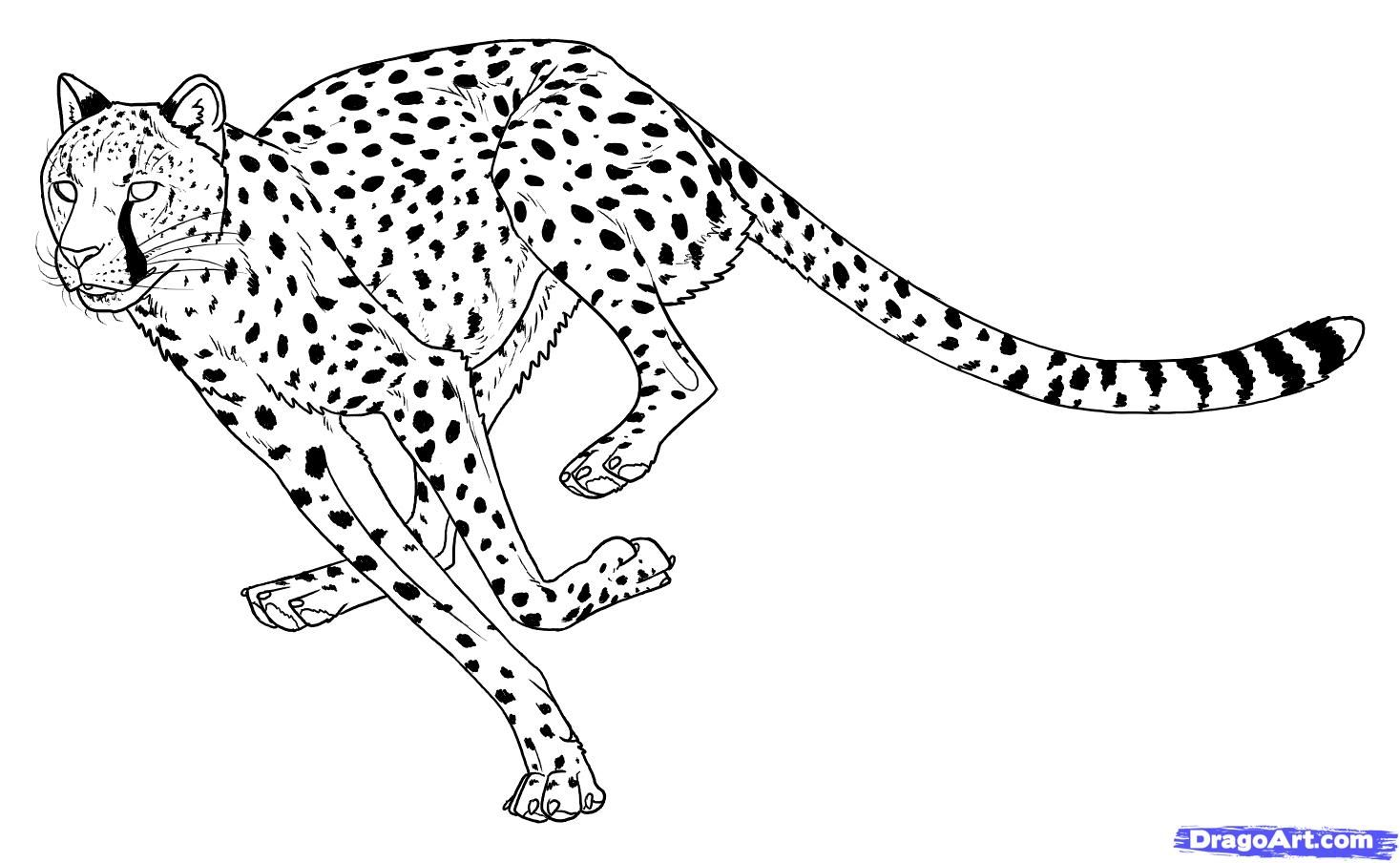 how to draw a cheetah step by step how to draw a cheetah drawingforallnet step how by a cheetah draw to step