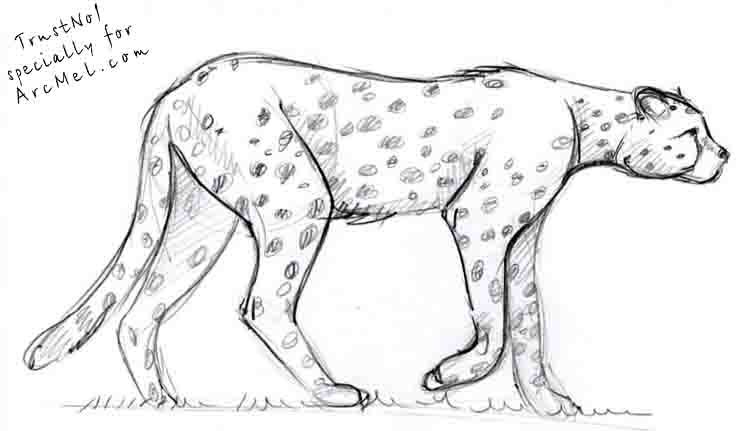 how to draw a cheetah step by step how to draw a cheetah easy drawing art step cheetah a by step to how draw
