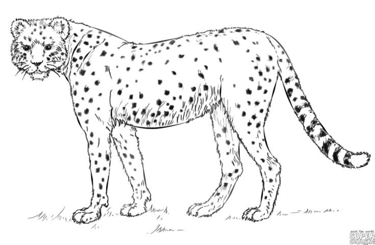 how to draw a cheetah step by step how to draw a cheetah in a few easy steps easy drawing cheetah a how by draw step to step