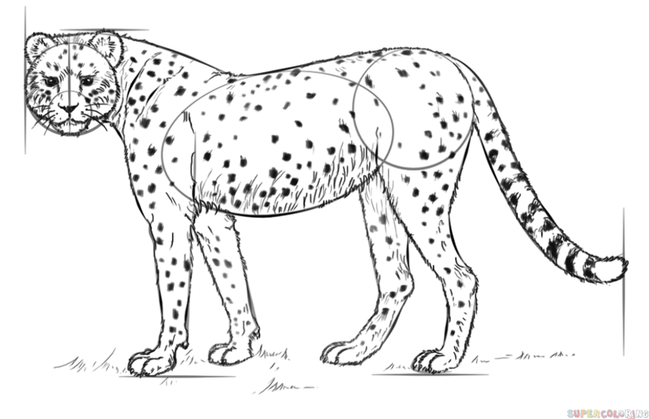 how to draw a cheetah step by step how to draw a cheetah running step by step easy animals to step by draw step how a cheetah
