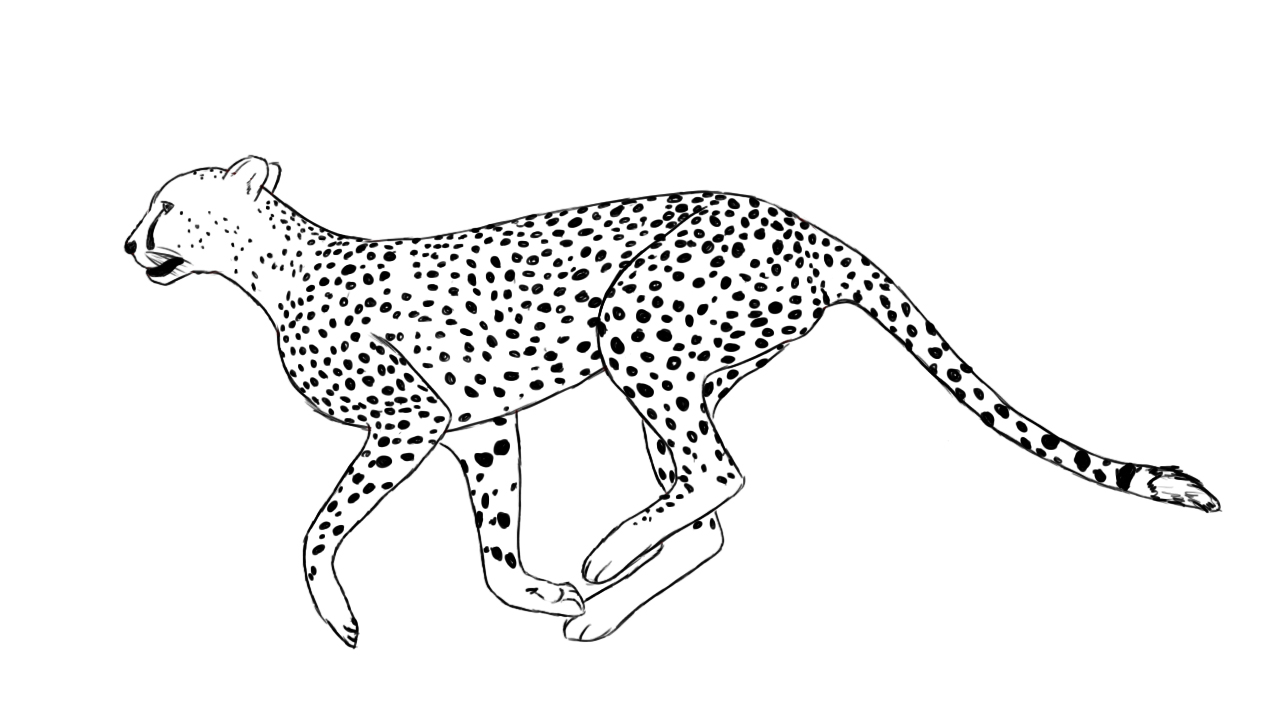 how to draw a cheetah step by step how to draw a cheetah step by step drawing tutorials a to step step draw cheetah by how
