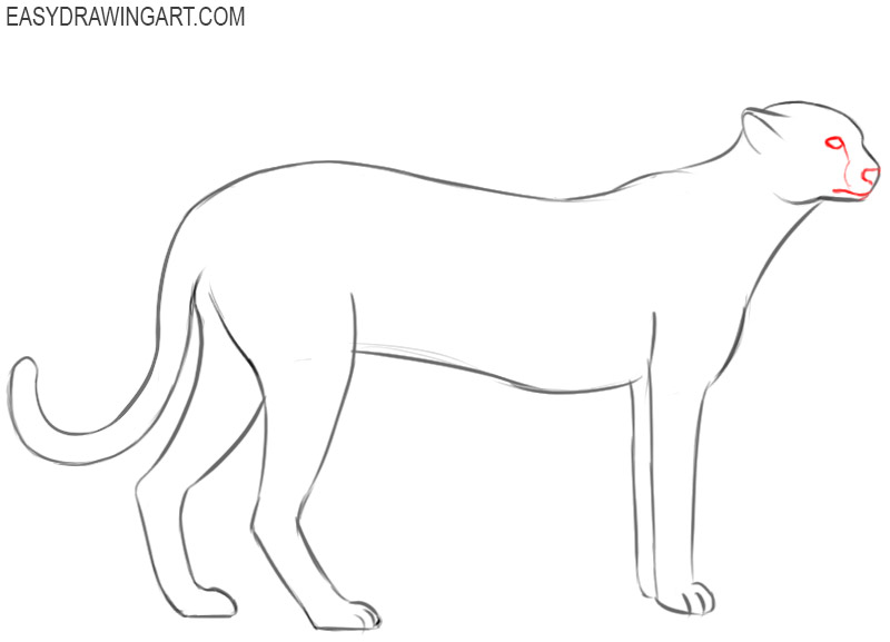 how to draw a cheetah step by step how to draw a cheetah step by step how draw cheetah a by step step to