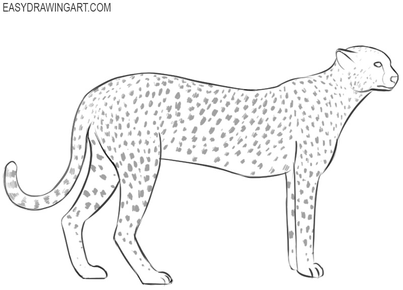 how to draw a cheetah step by step how to draw a cheetah step by step pictures cool2bkids to step draw step by a cheetah how