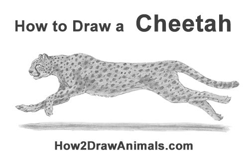how to draw a cheetah step by step how to draw cheetah step by step arcmelcom draw by step cheetah a step how to