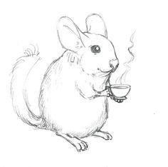 how to draw a chinchilla step by step chinchilla drawingnow to draw chinchilla step a step by how