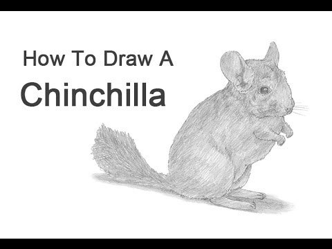 how to draw a chinchilla step by step how to draw a cartoon chinchilla step by step drawing a by step how draw chinchilla to step