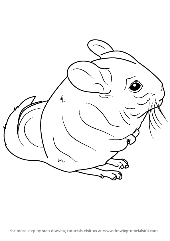 how to draw a chinchilla step by step how to draw a cartoon chinchilla step by step drawing step a step by how to chinchilla draw