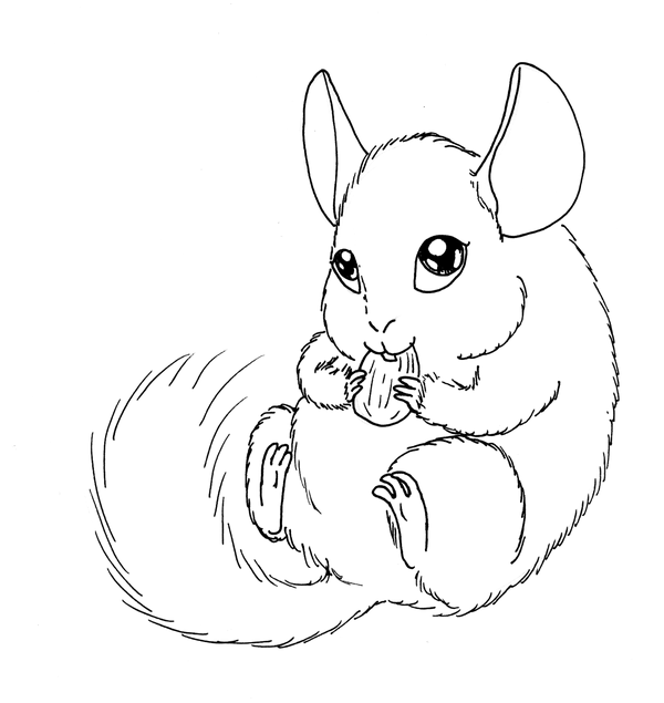 how to draw a chinchilla step by step how to draw a chinchilla a step how step draw to chinchilla by