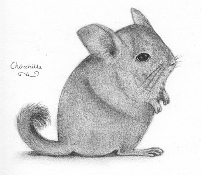 how to draw a chinchilla step by step how to draw a chinchilla step by how step a to draw chinchilla