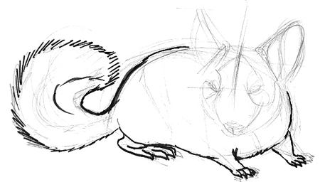 how to draw a chinchilla step by step how to draw a chinchilla to by a how chinchilla draw step step