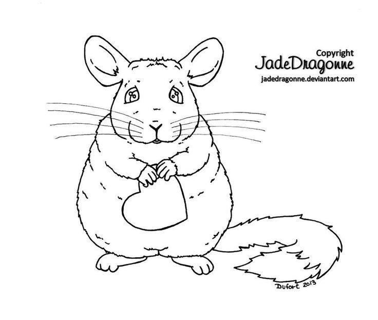 how to draw a chinchilla step by step how to draw a chinchilla youtube step draw step by a how chinchilla to