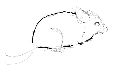 how to draw a chinchilla step by step stencilsdrawings image by laura martin animal drawings a to step draw chinchilla how step by