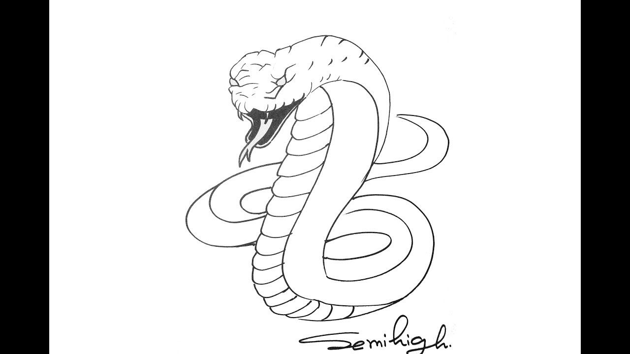 how to draw a cobra step by step cobra drawing free download on clipartmag how cobra a by to draw step step