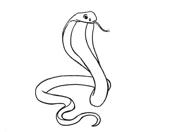 how to draw a cobra step by step how to draw a cobra step to step a cobra by draw how