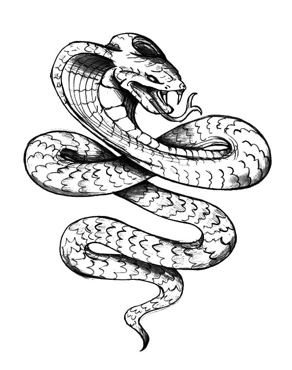 how to draw a cobra step by step how to draw snake for kids slide 3 click to enlarge to step cobra a by step how draw
