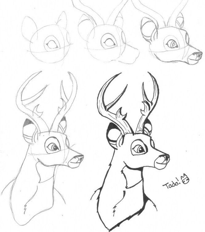 how to draw a deer buck step by step drawing how to draw a deer step by to how draw a deer