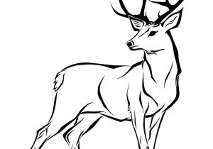 how to draw a deer deer head drawing easy at paintingvalleycom explore a deer how draw to