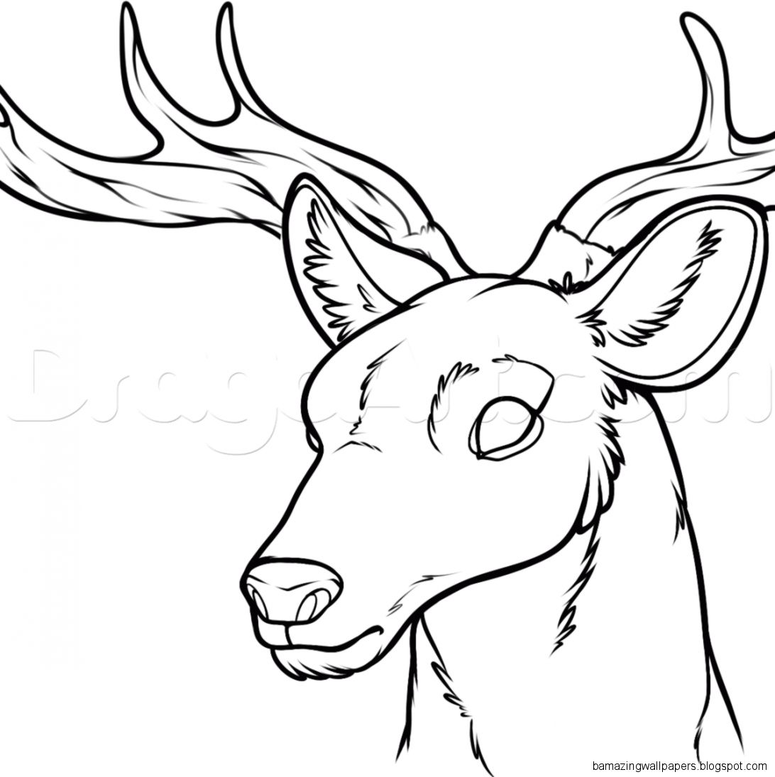 how to draw a deer deer head drawings amazing wallpapers a deer how draw to