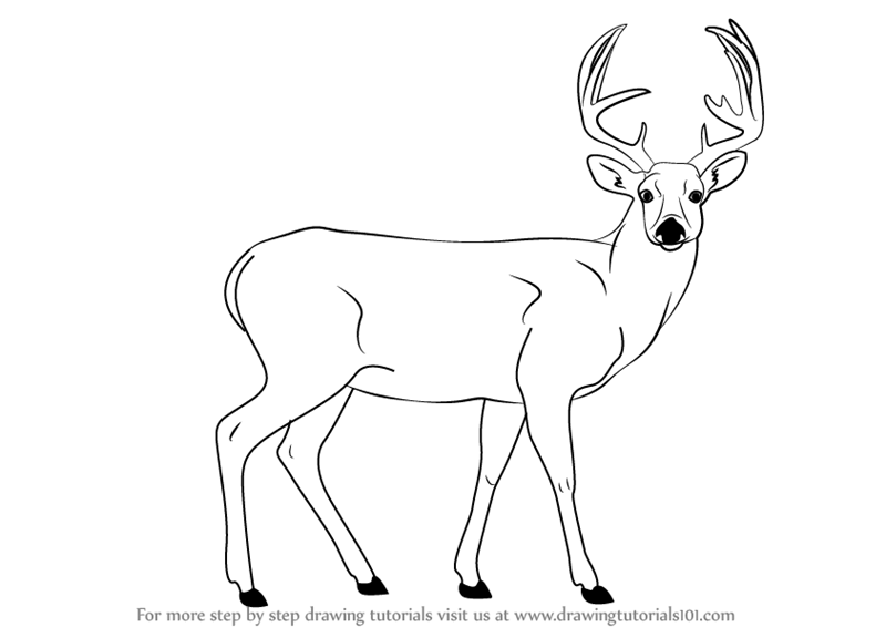 how to draw a deer draw a buck buck deer step by step drawing sheets draw to a deer how