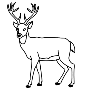 how to draw a deer easy drawing deer head free download on clipartmag a how to draw deer