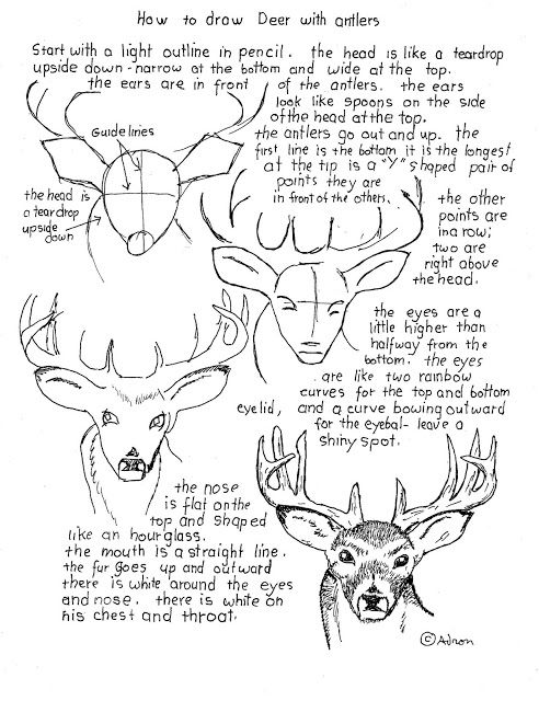 how to draw a deer how to draw a buck deer with antlers worksheet how to to a draw deer how